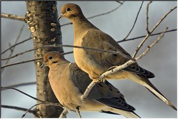 Watch the birdies