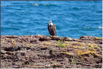 Visiting Eagle