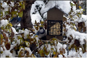 Back yard feeders