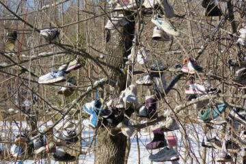 Shoes grow on trees