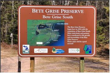 Bete Gris