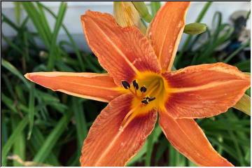This week's blooms!
