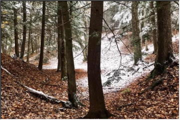 Early snow in the woods