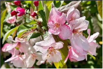 Keweenaw in Bloom