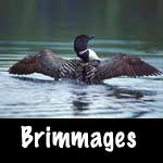 Brimmages Photography
