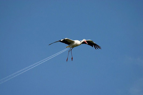 seagull on afterburner