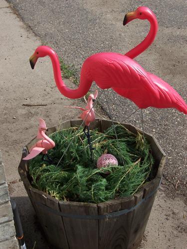 Deb and Mr. Deb's Flamingo nest