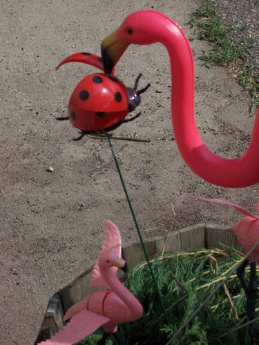Deb and Mr. Deb's Flamingos feeding time