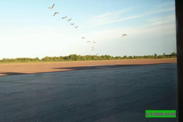 geeseatairport