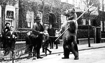 Bear in London