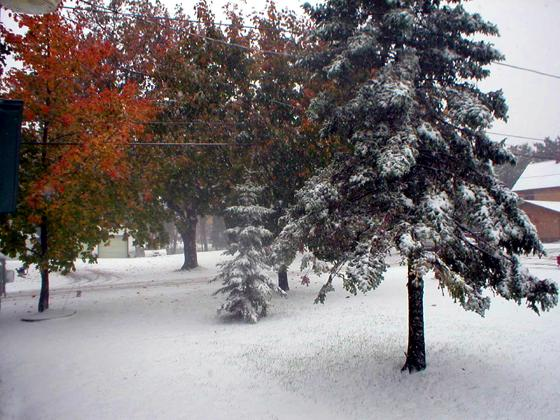Snow covered colors