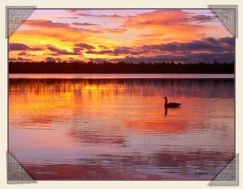 Dawn goose