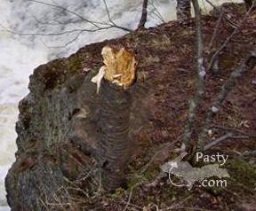 blond visitor at Hungarian Falls