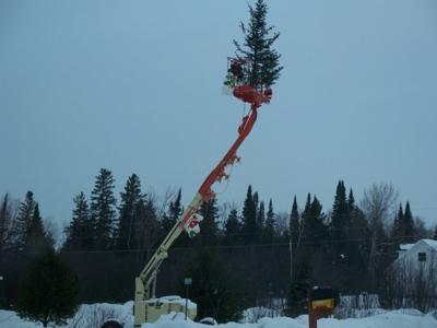 TreeOnCrane2007