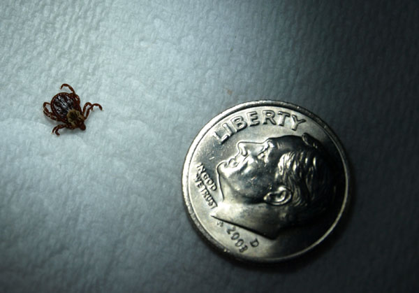 Compared in size to a dime