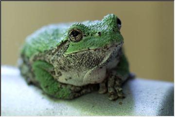 Dan Urbanski's frog!