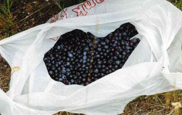 bagged berries