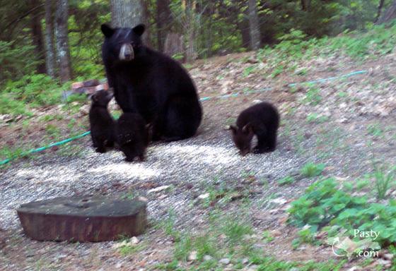 Mama Bear and her brood!