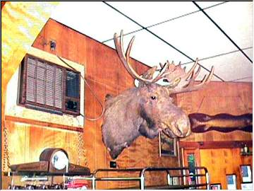 Mr. Moose at Dreamland