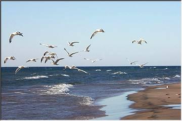 Superior shore