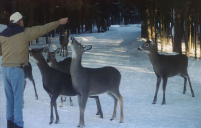 Don and his deer friends